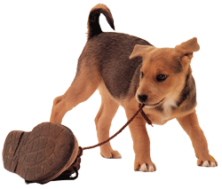Puppy Training Classes and Consultations